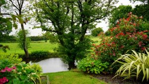 garden and a pond