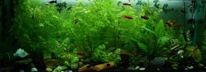 picture of how to prepare an aquarium for relocation,
