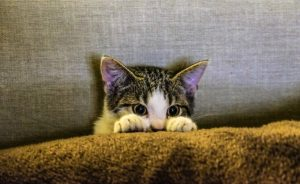 A kitten hiding behind a pillow