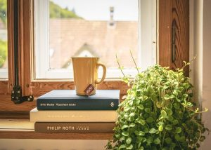 plant, books and windows