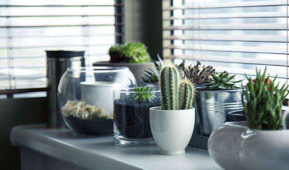 Arrange your plants after moving to make your home look wonderful.