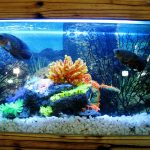 Tips for safely moving a fish tank.